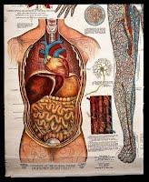 https://sites.google.com/a/icsz.ch/library/pyp/grade-3/human-body-systems